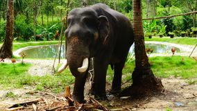 大象村庄在泰国 免版税图库摄影