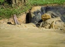 大象树干和脚 免版税库存照片