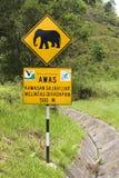 大象横穿 库存图片