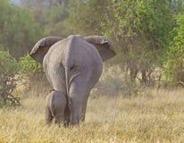 大象母亲和小牛Elephantidae 免版税库存图片