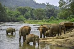 大象沐浴 免版税库存图片