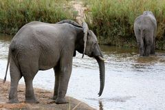 大象河流桥渡 免版税库存图片
