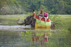 大象洒水 在一个热带湖的大象徒步旅行队 免版税库存照片