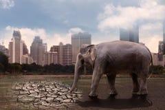 大象渴,在贫瘠土壤的身分 库存照片