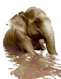 大象游泳 免版税库存图片