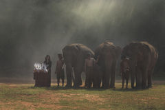 大象游行 库存图片