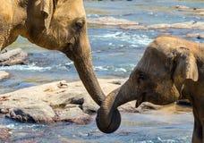 大象爱情故事 免版税库存图片