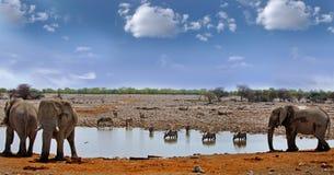 大象牧群在一waterhole的与羚羊属在背景中 库存图片