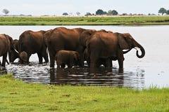 大象牧群在湖 免版税库存照片