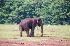 大象特写镜头 免版税库存照片