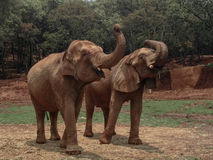 大象生活 库存图片