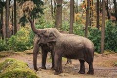 大象的午餐 免版税图库摄影