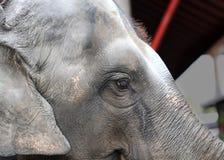 大象的照片画象 库存照片