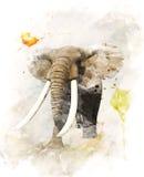 大象的水彩图象 向量例证