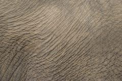 大象皮肤 免版税图库摄影