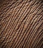 大象皮肤 免版税库存照片