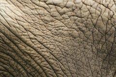 大象皮肤 免版税库存图片
