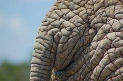 大象皮 免版税图库摄影