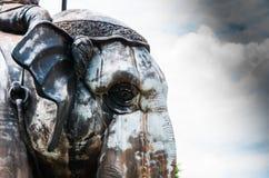 大象目光接触  库存图片