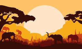 大象背景剪影在森林里 免版税库存照片