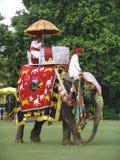 大象节日印度斋浦尔 免版税库存照片