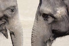 大象谈话 库存图片