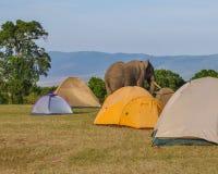 大象通过 库存照片