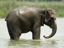 浴大象采取 免版税库存图片