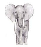 大象铅笔草图 免版税库存图片
