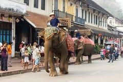 大象队伍老挝人新年2014年在琅勃拉邦,老挝 库存图片
