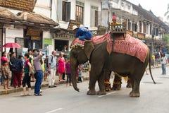 大象队伍老挝人新年2014年在琅勃拉邦,老挝 免版税库存照片