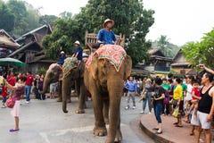 大象队伍老挝人新年2014年在琅勃拉邦,老挝 库存照片