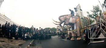 大象队伍荣誉已故的国王 库存照片