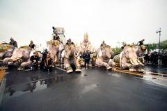 大象队伍荣誉已故的国王 图库摄影