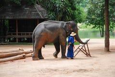 大象阵营 免版税图库摄影