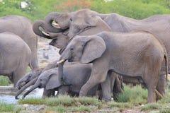 大象雄伟-非洲野生生物背景-树干为生活 图库摄影
