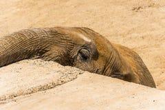 大象面孔 免版税库存照片