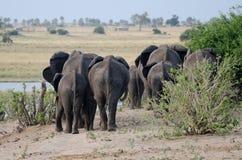 大象靶垛 库存照片