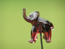 大象顶头针 库存图片