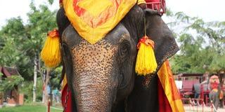 大象题头 免版税图库摄影
