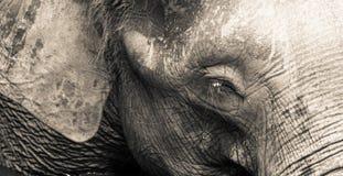 大象题头 免版税库存照片