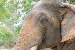 大象题头关闭 免版税库存照片