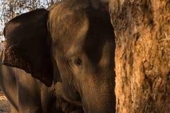 大象题头关闭 图库摄影