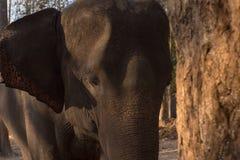 大象题头关闭 库存图片