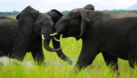 大象飞行 免版税库存照片