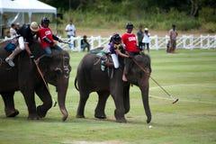 大象马球比赛。 免版税库存图片