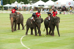 大象马球比赛。 库存图片