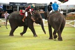 大象马球比赛。 图库摄影