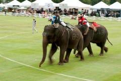 大象马球比赛。 免版税图库摄影
