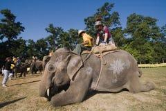 大象马球比赛,在塔库尔德瓦拉, Bardia,尼泊尔 免版税库存图片
